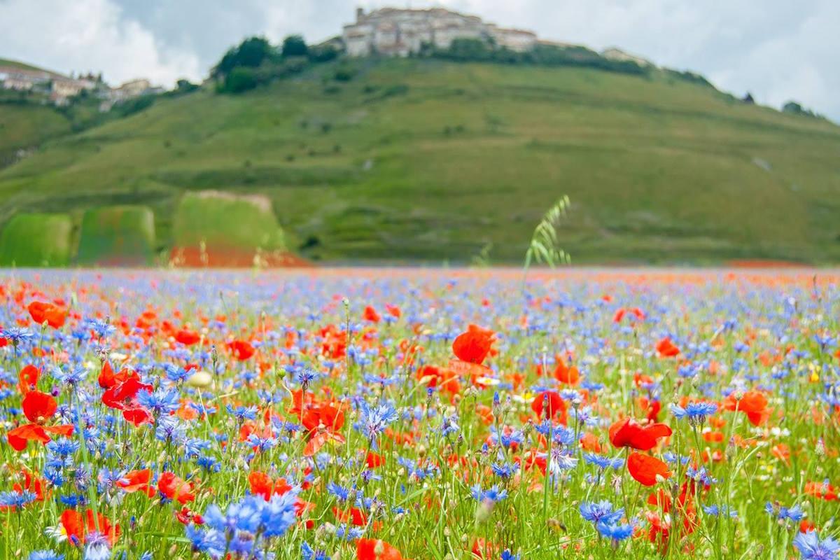 La fioritura di Castelluccio di Norcia: paesaggi spettacolari a pochi km da Ascoli Piceno